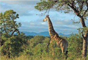 Safe Kruger National Park shuttle service